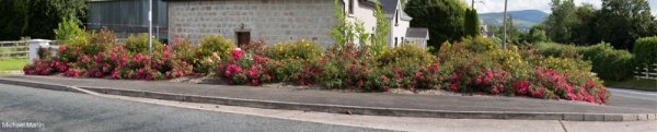 Larragh Road Rose bed.