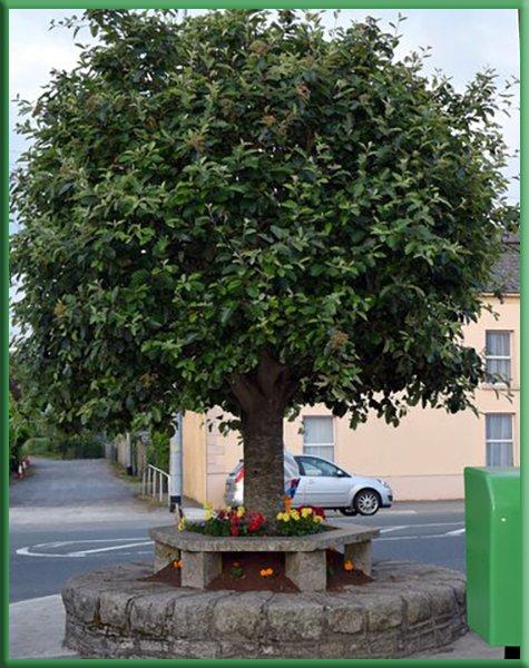 Bull tree