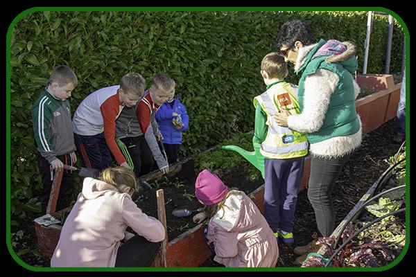 Community/School Organic Garden