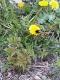 Bumblebee-dinner-time-by-Bernie-Mullins