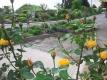 Village flowerbeds
