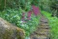 Primula Path