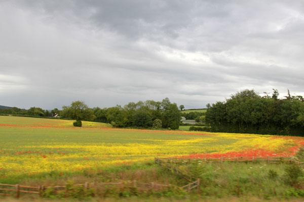 The Carlow field
