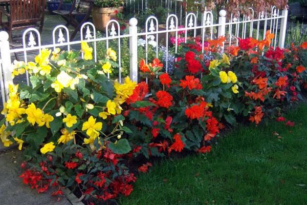 Declan's-garden.