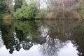 Altamont Reflection