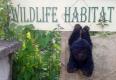 Gorilla takes up residence