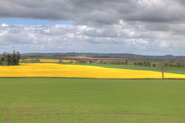Fields in Roscat