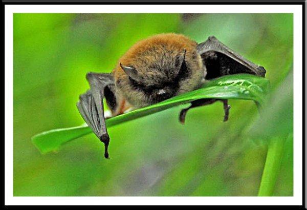 Whisker Bat