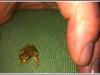 Baby frog - Hands off