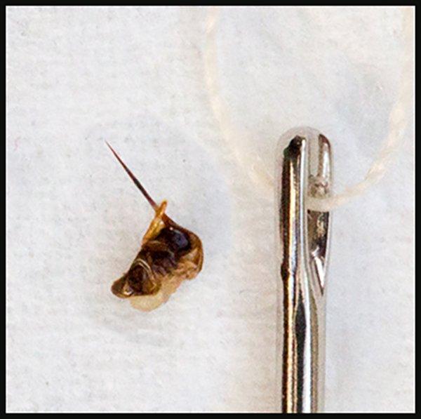 Bee stinger with needle