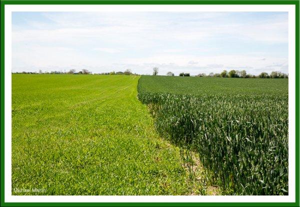 Spring Barley. Winter Oats.jpg