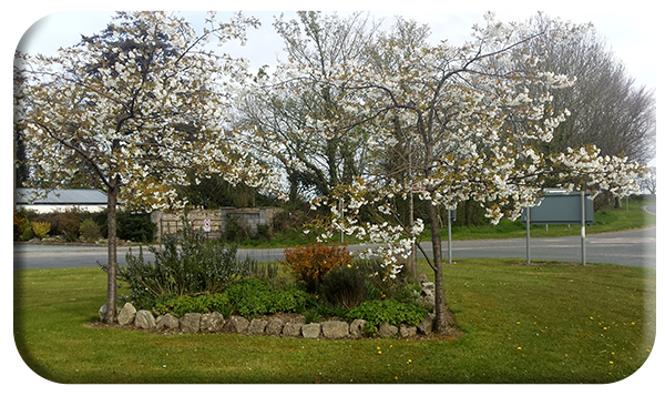 Ballykealey in Bloom