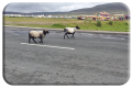 Slow lane on Achill island