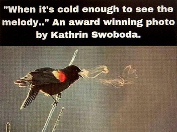 Bird-song