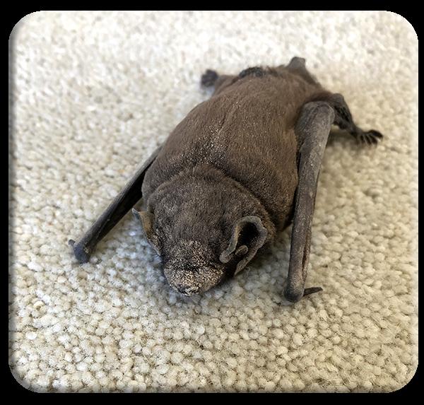 A lost bat