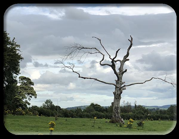 Moribund-tree