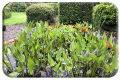 Pond-of-pickerelweed