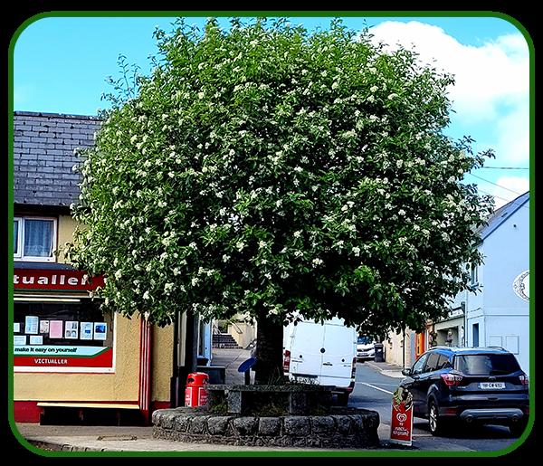 The Bull Tree