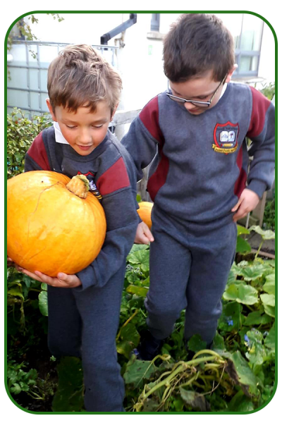 pumpkin-3-002-copy