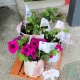 Flower Container Competition
